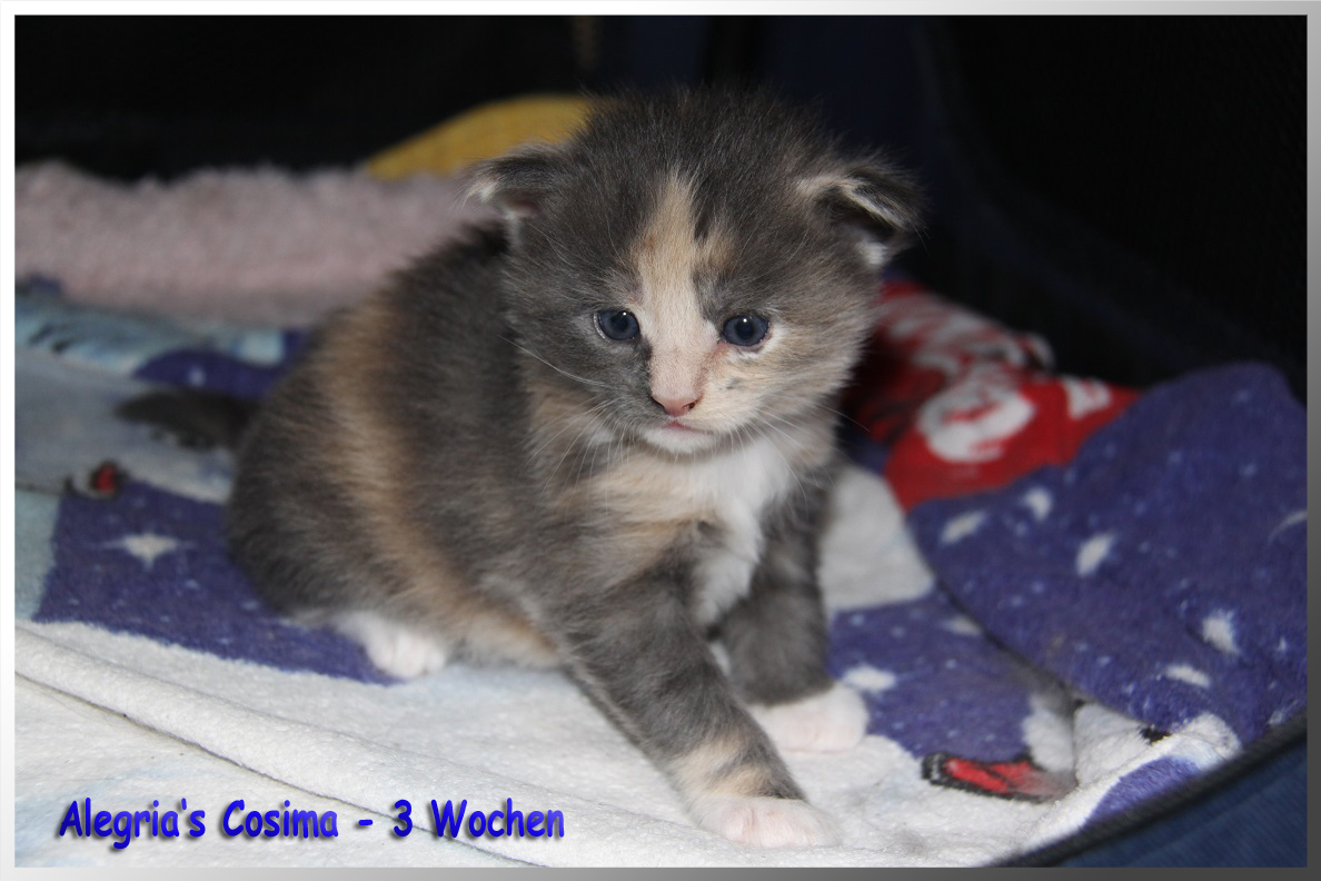 Cosima 1 3W