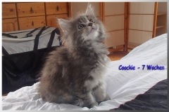 Cookie 7 Wo 1