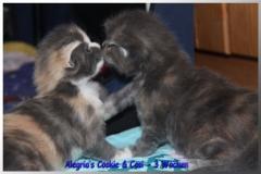 Cookie und Cosi 2