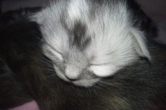 Kätzchen 3