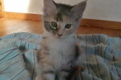 Grizabella (3)
