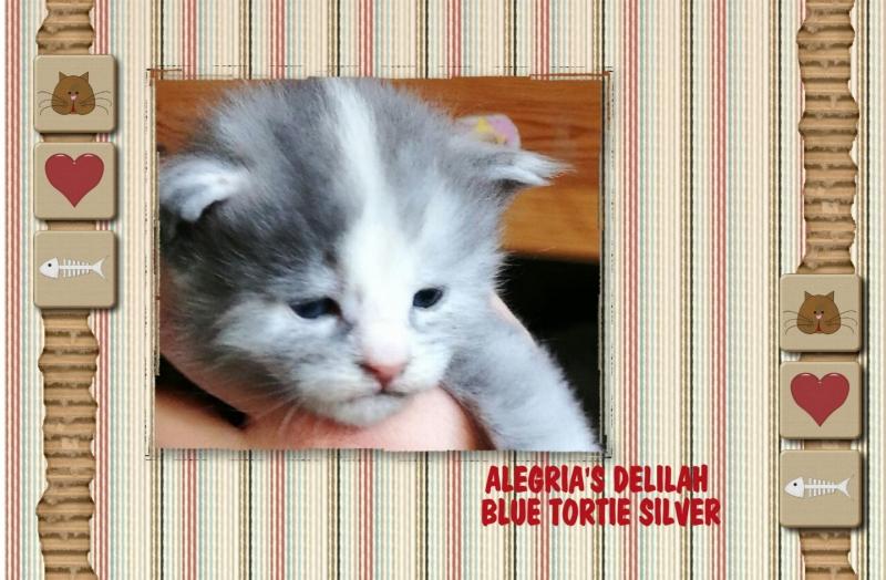 ALEGRIAS-D-WURF.output-2