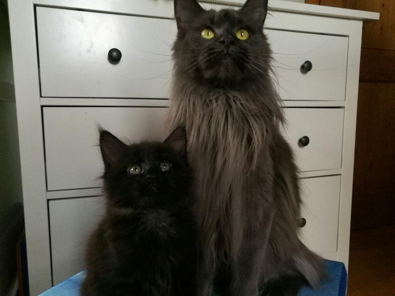 DIEGO ♂- BLACK SOLID & Mama Greta