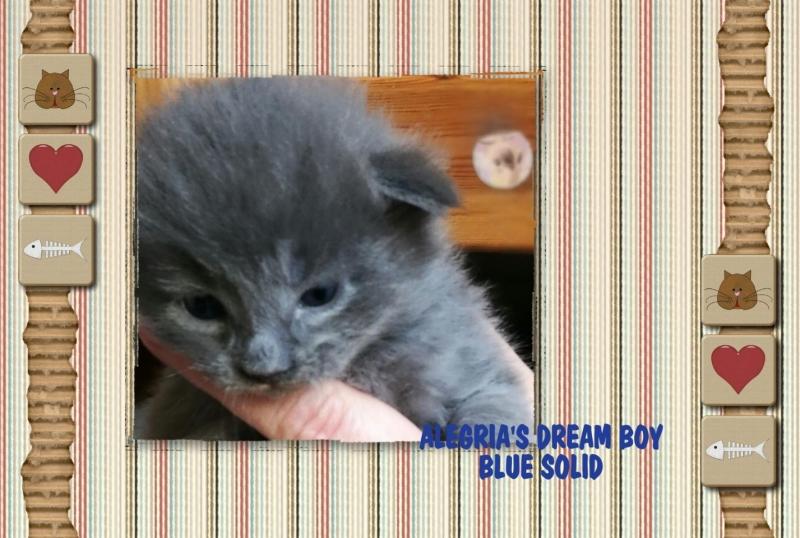 DREAM BOY ♂ –  BLUE SOLID