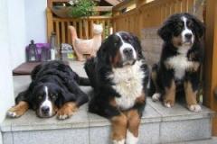 Bea, Jenna ( 16 Wochen) und Escara 06.08 020