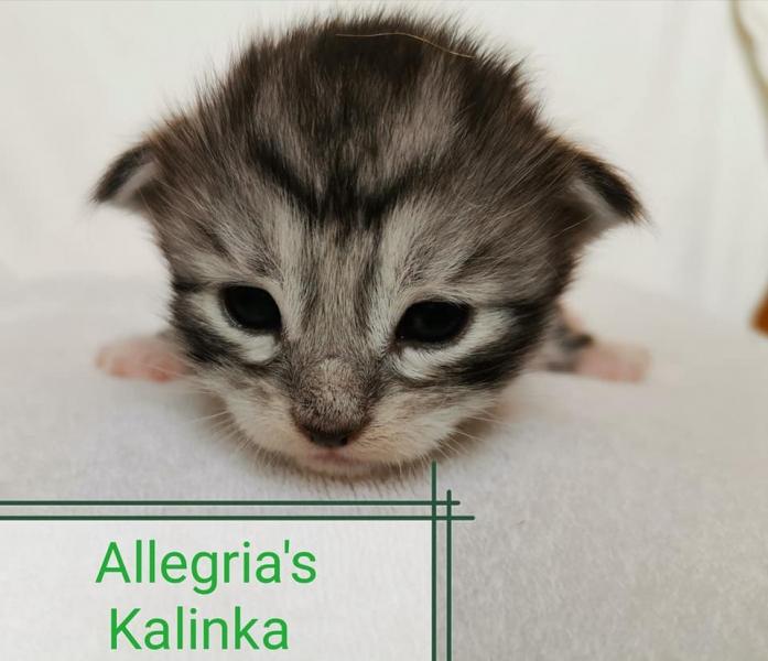 Kalinka02