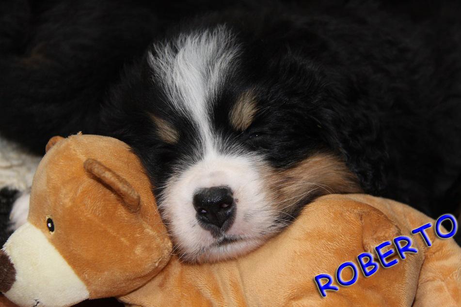 Roberto 5,5 Wochen