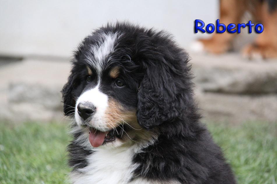 Roberto 9 Wochen