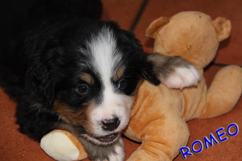 Romeo 5,5 Wochen