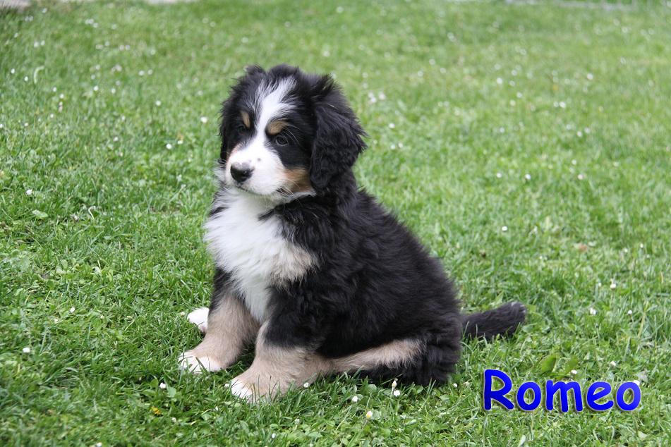 Romeo 8 W