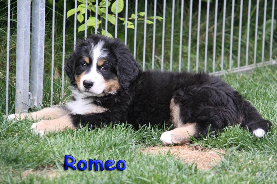 Romeo 9 Wochen