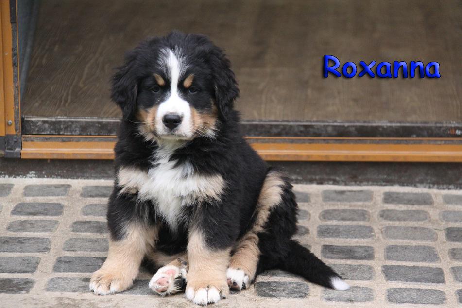 Roxanna