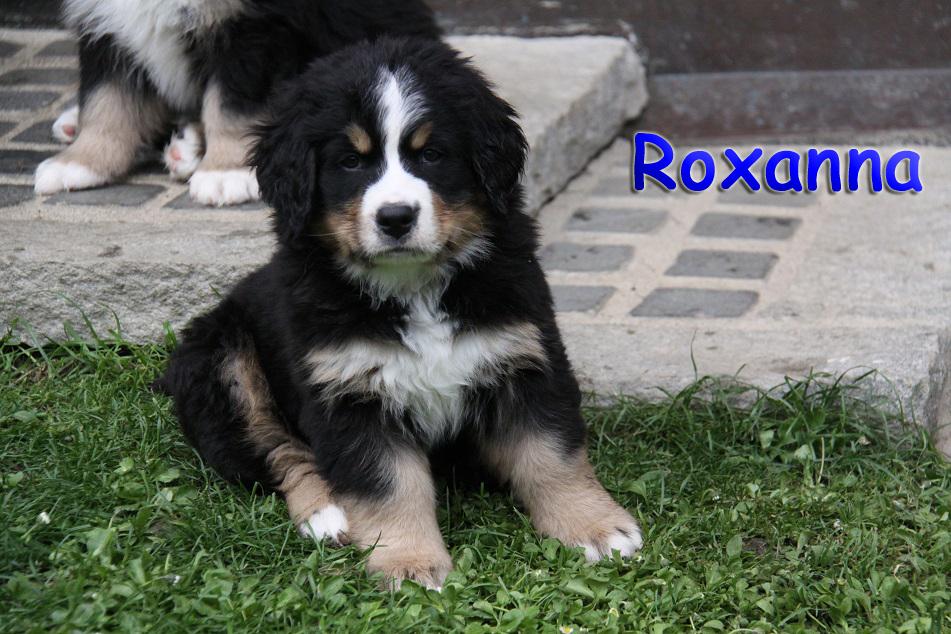 Roxanna 8 W
