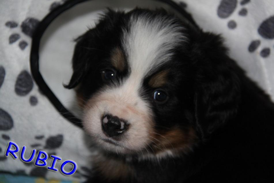 Rubio 5,5 Wochen