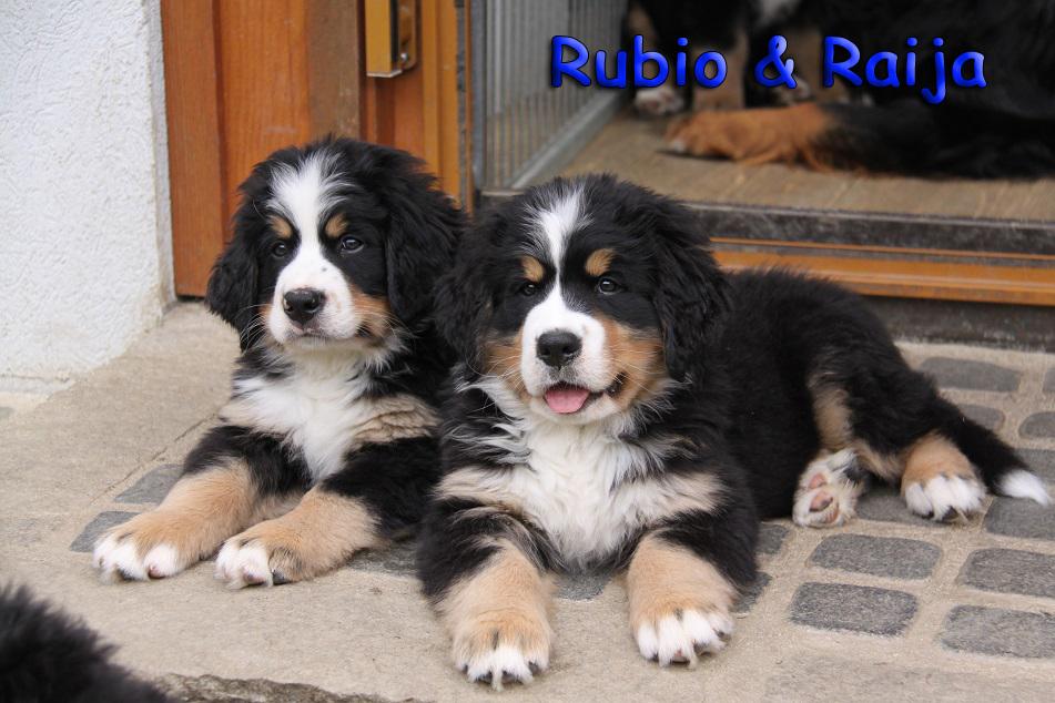 Rubio und Raija 1