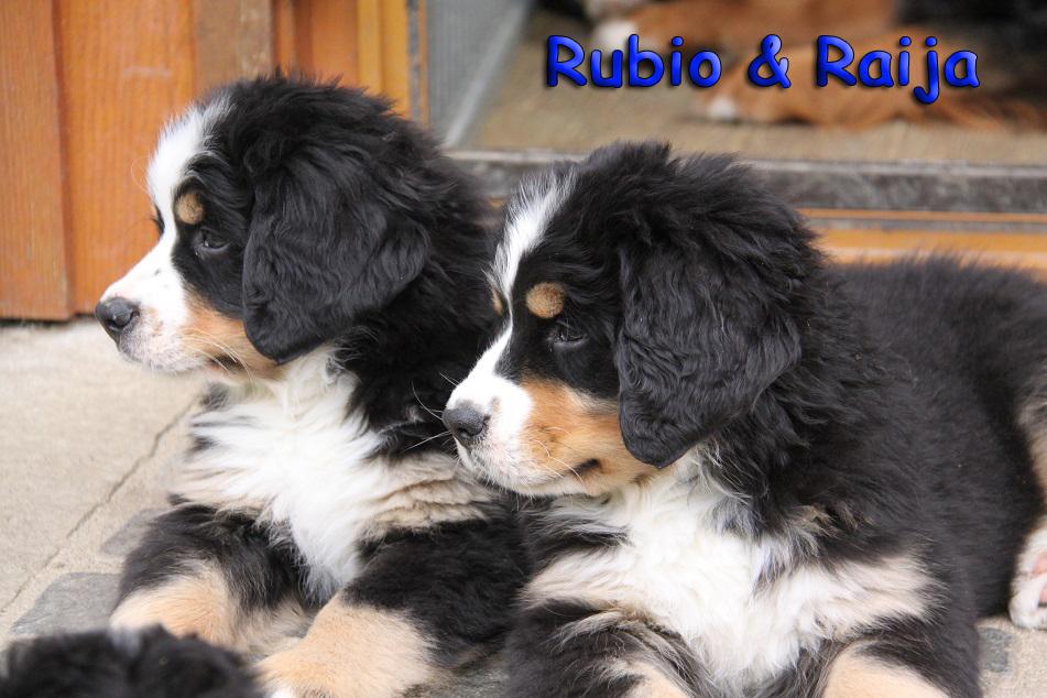 Rubio und Raija 2