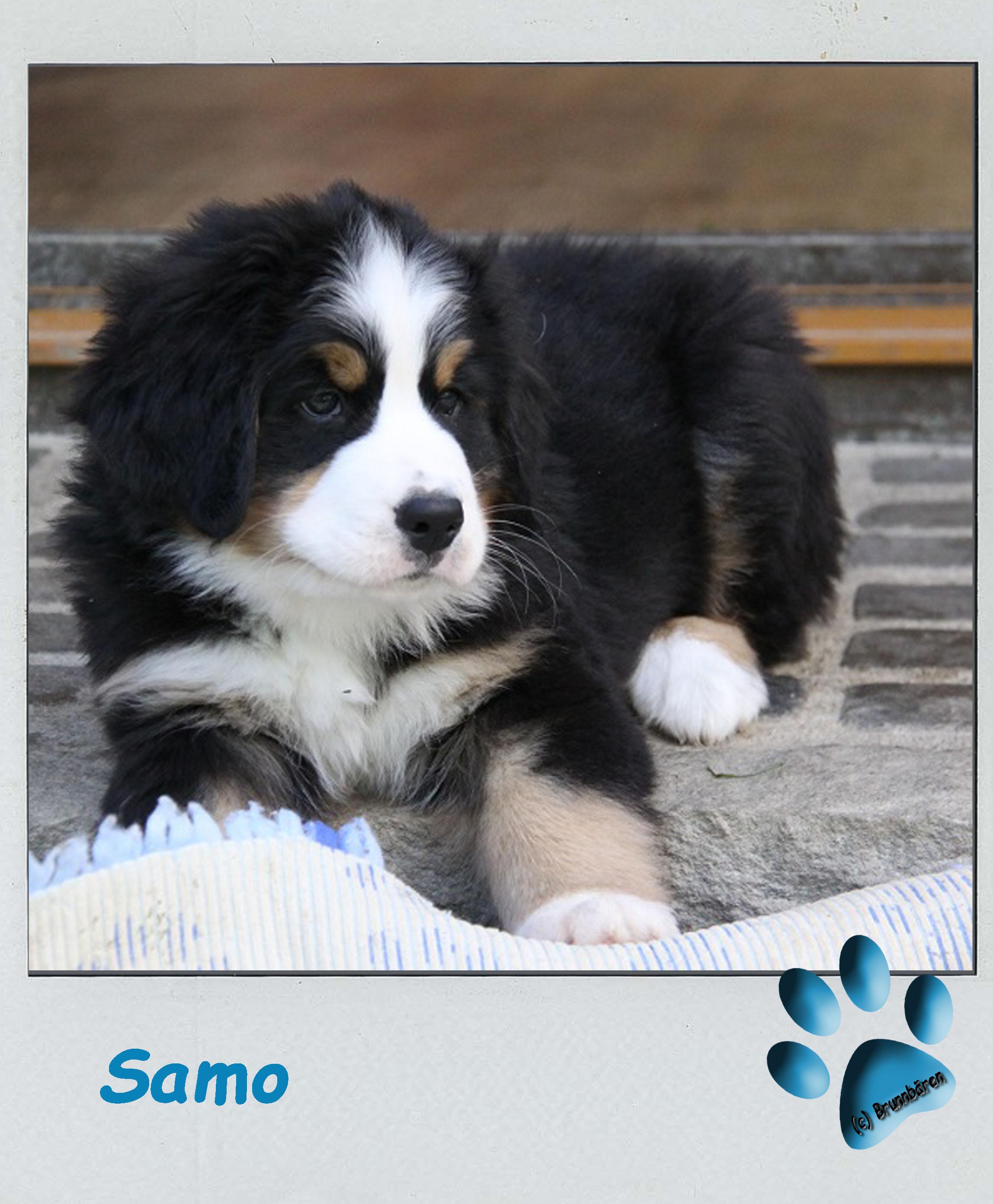 8 Wochen - Samo
