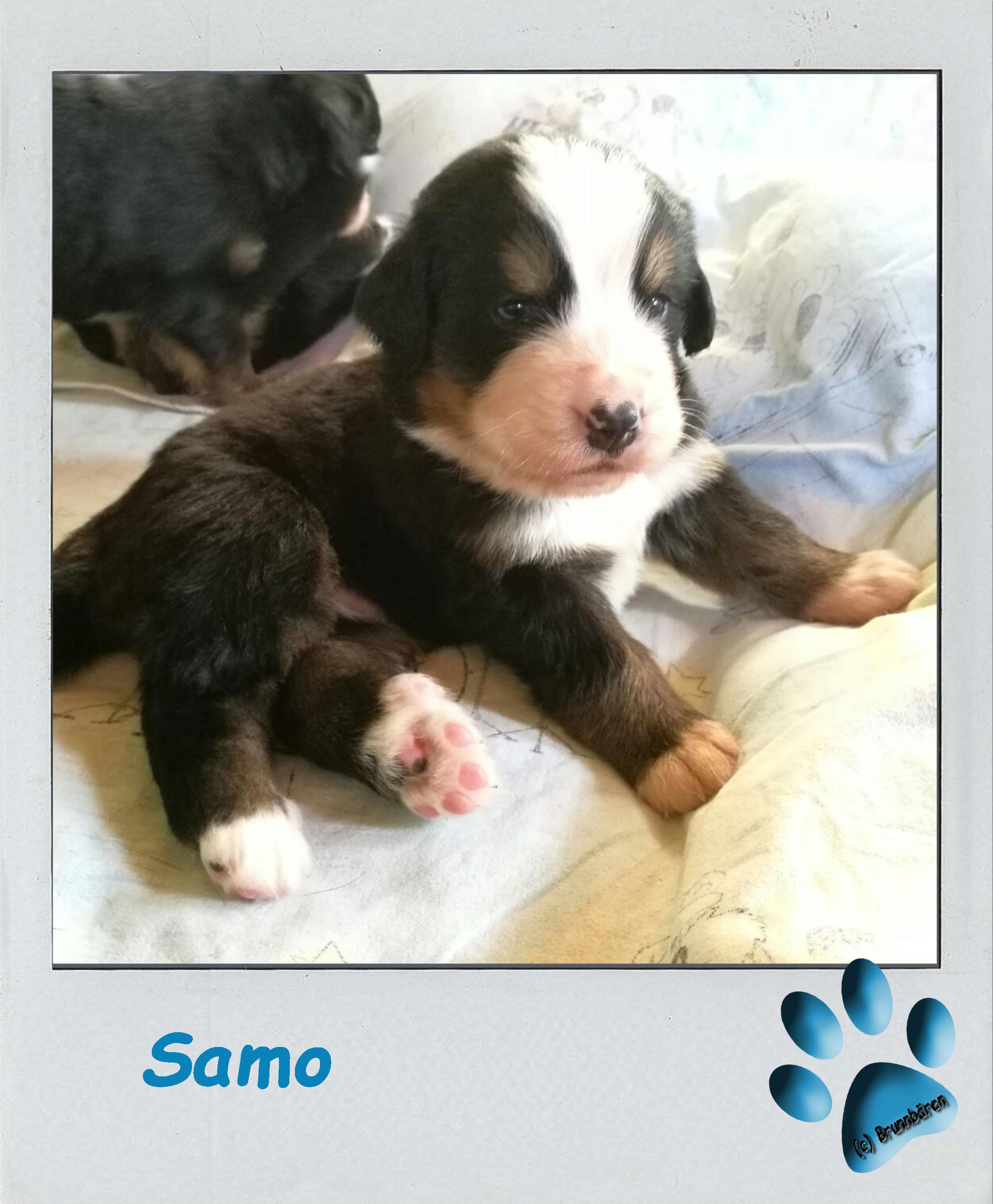3 Wochen - Samo