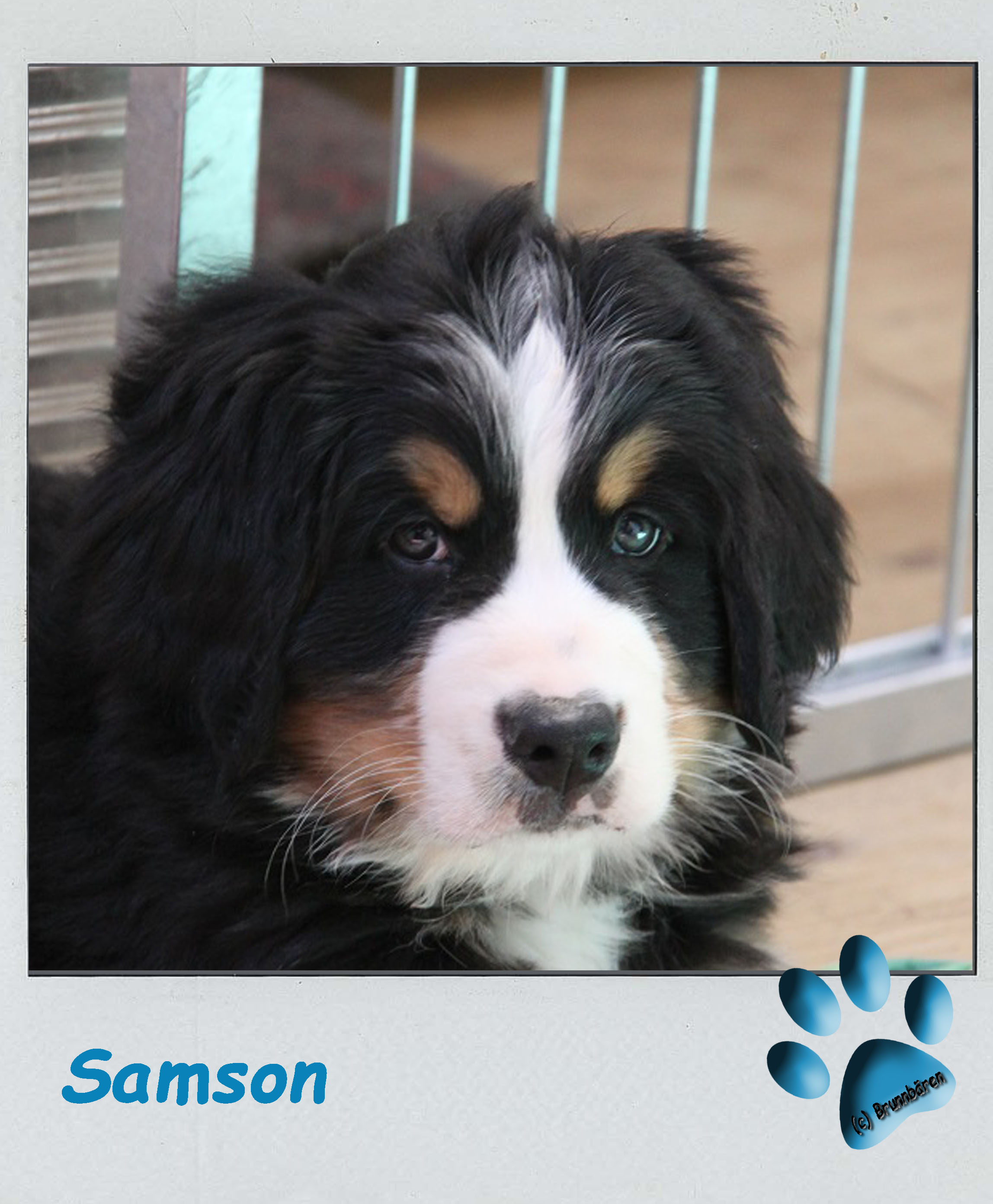 8 Wochen - Samson