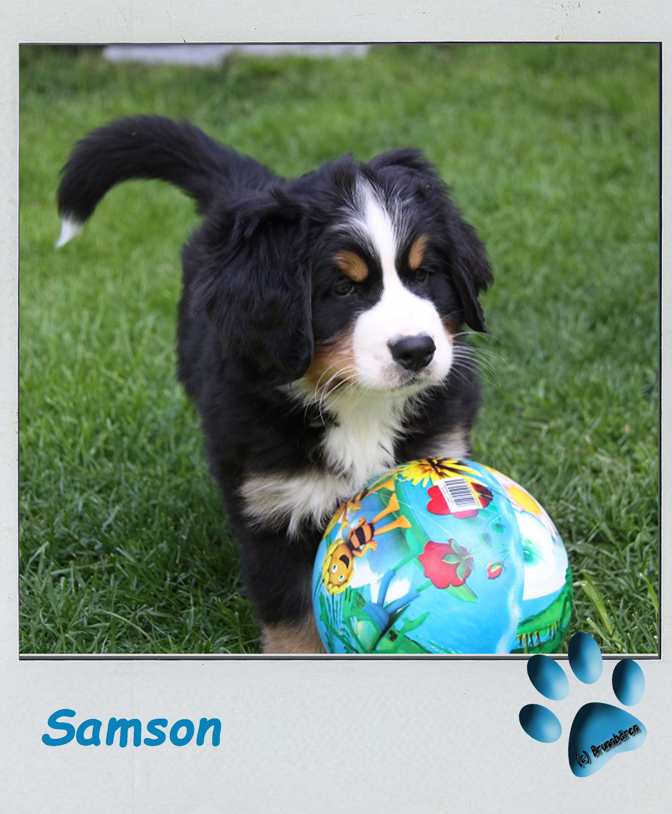 8 Wochen - Samson 2