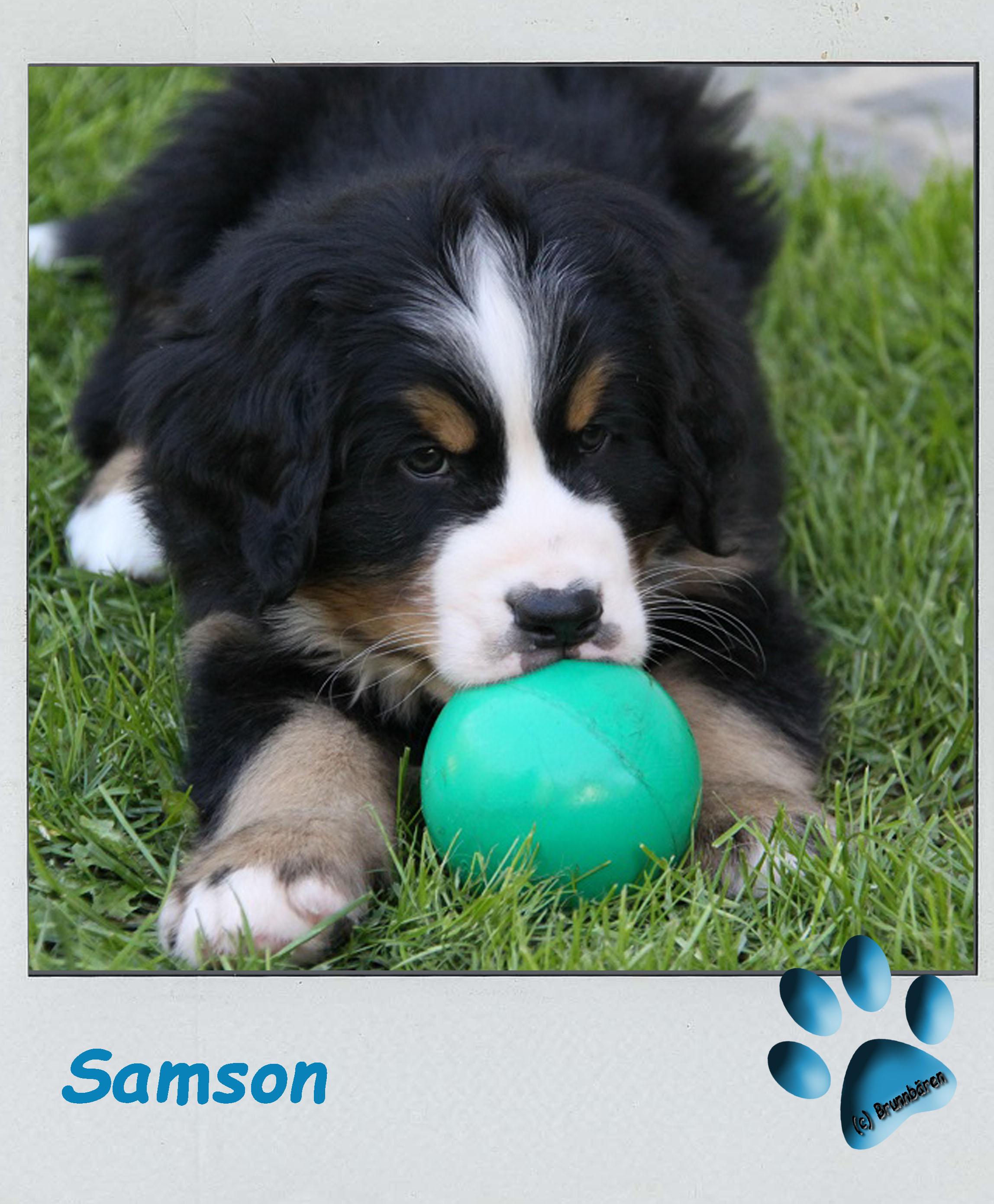 8 Wochen - Samson 3