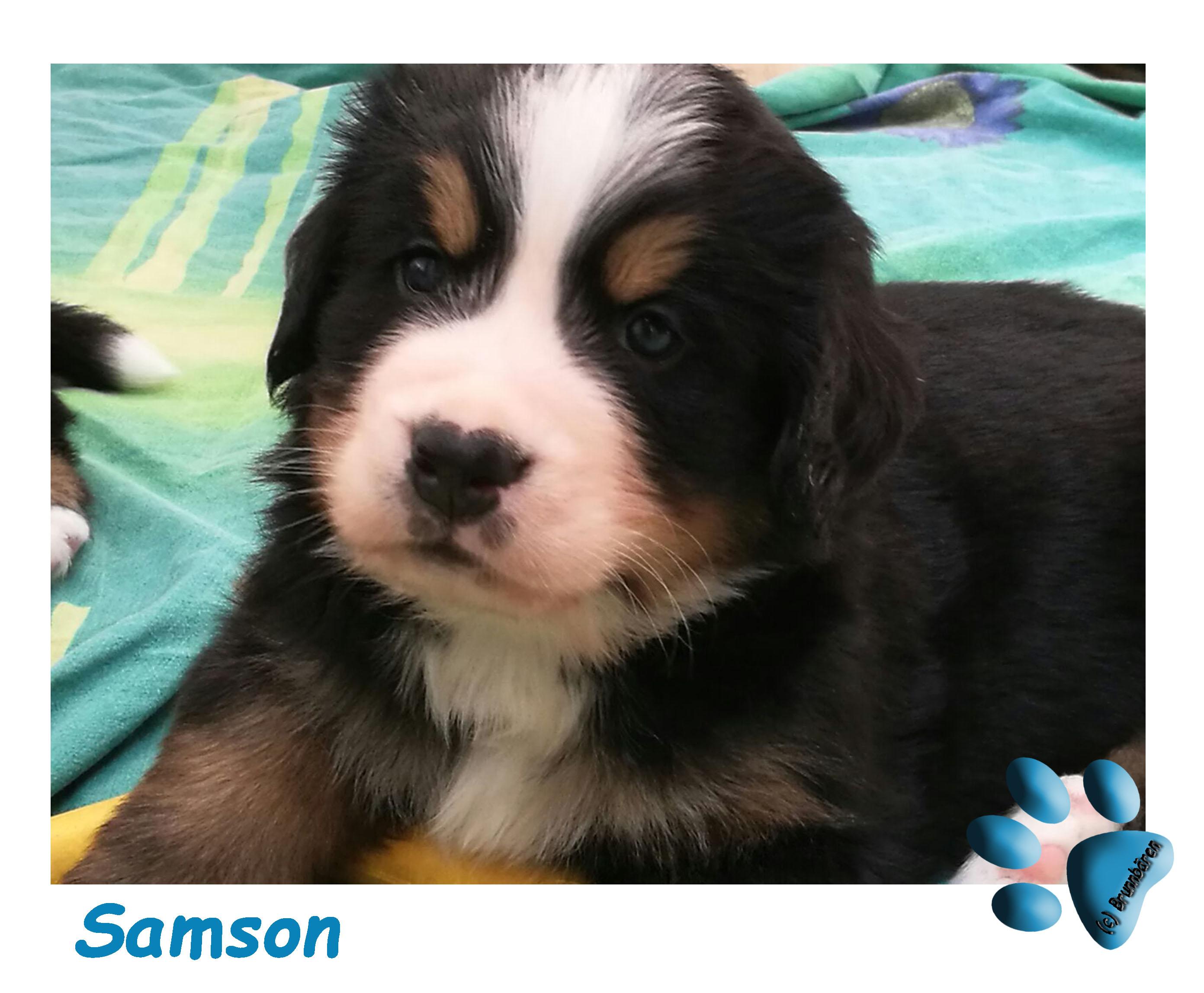 5 Wochen - Samson