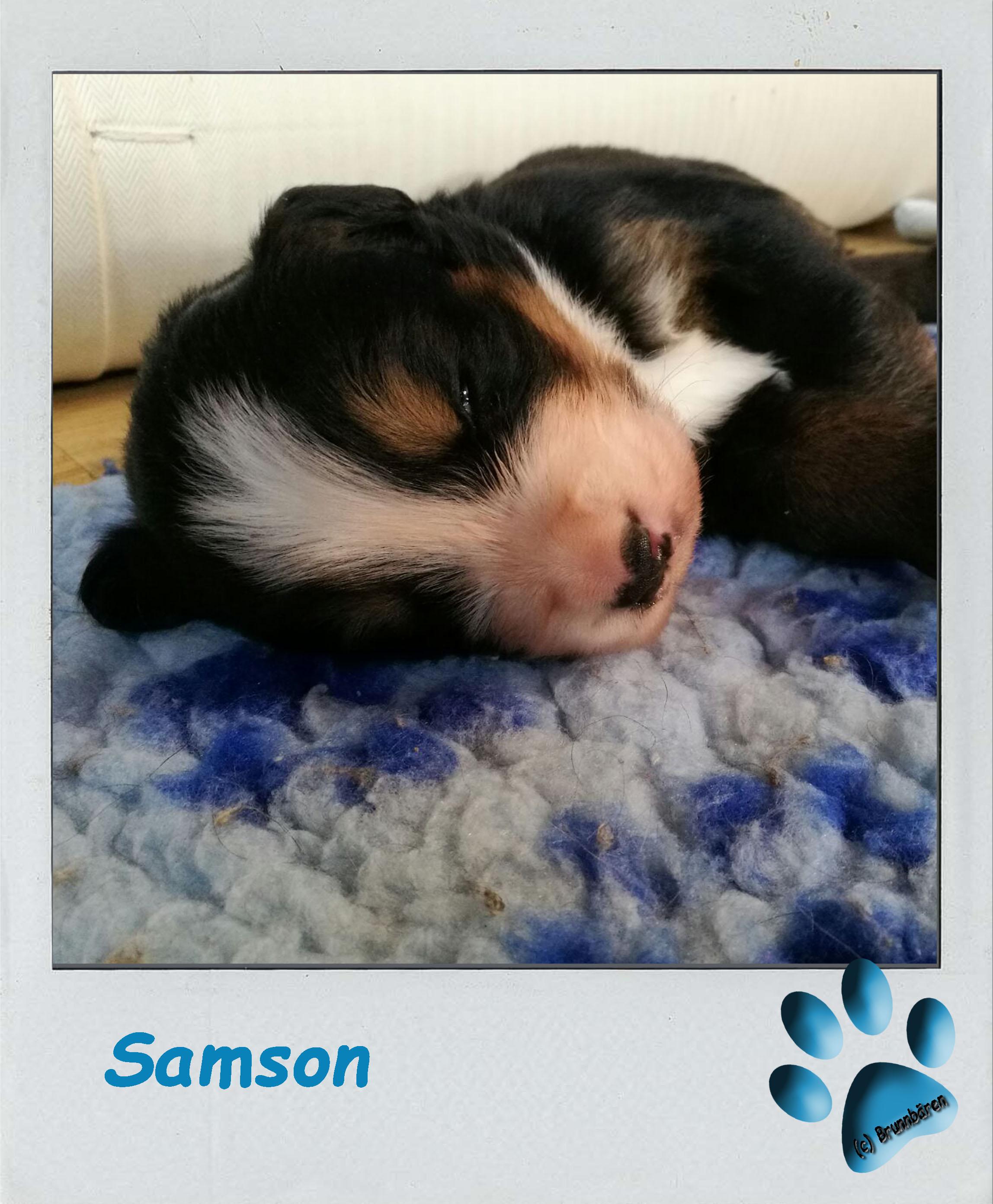 3 Wochen - Samson