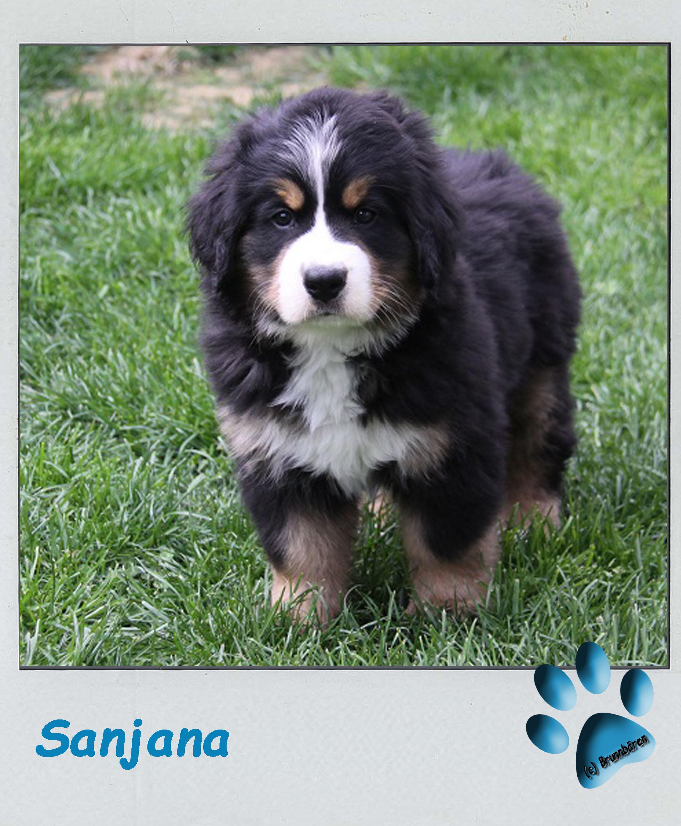 8 Wochen - Sanjana 1