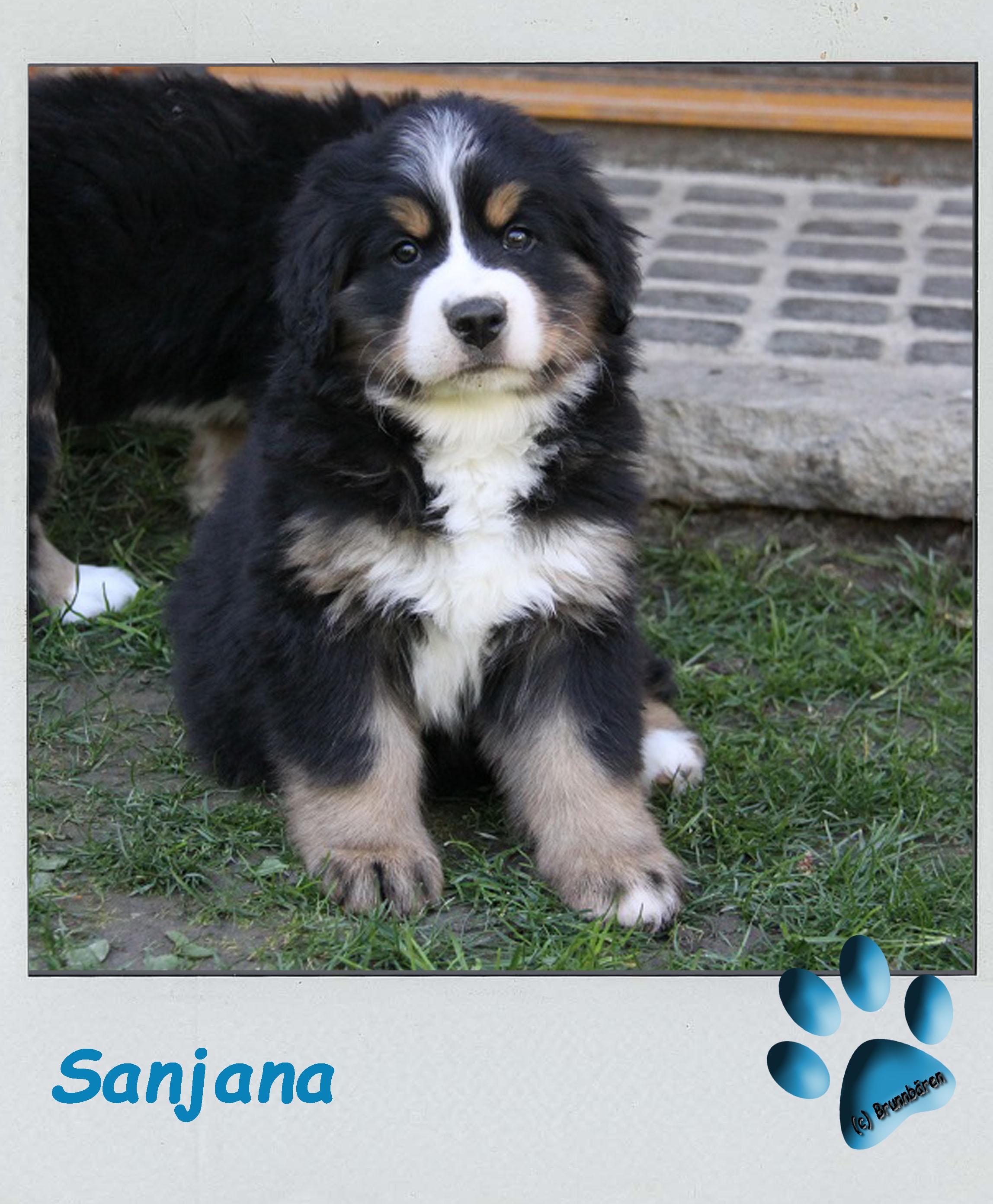 8 Wochen - Sanjana 3