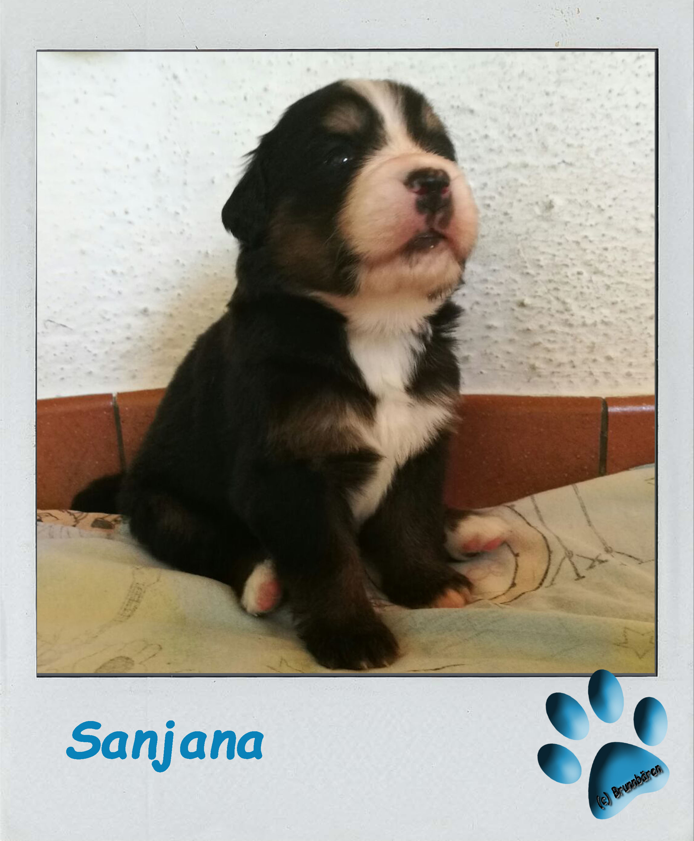 3 Wochen - Sanjana