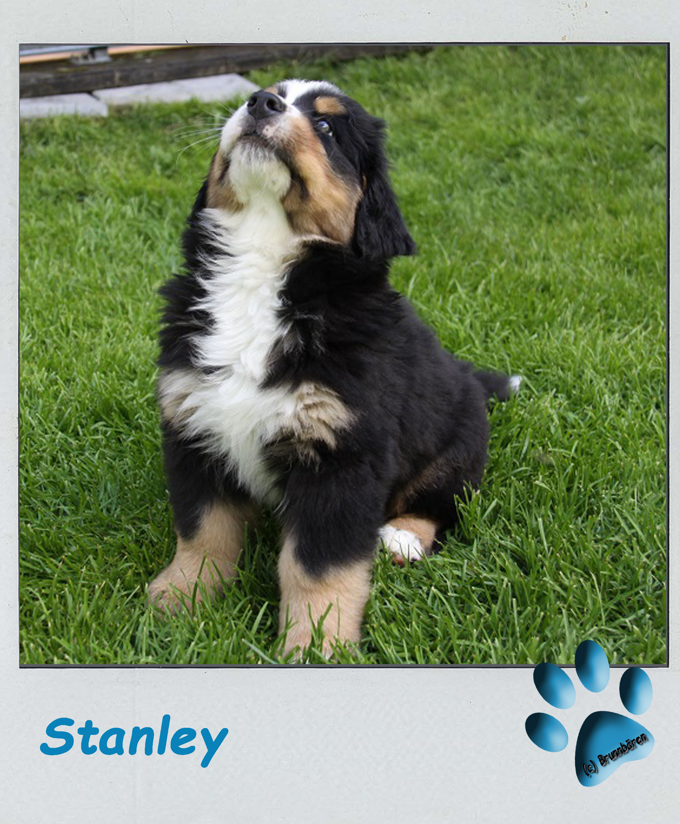 8 Wochen - Stanley 1