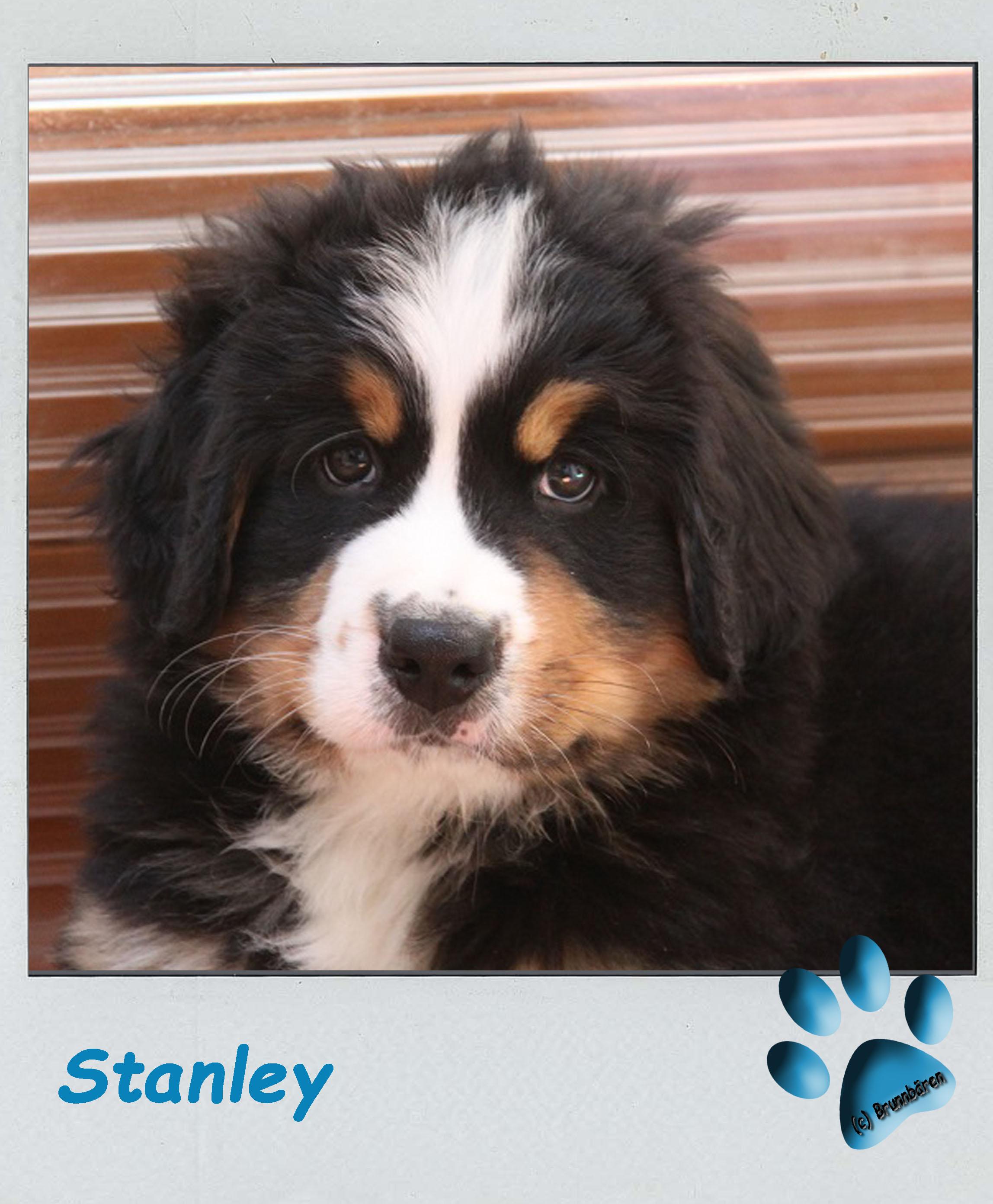 8 Wochen - Stanley 2