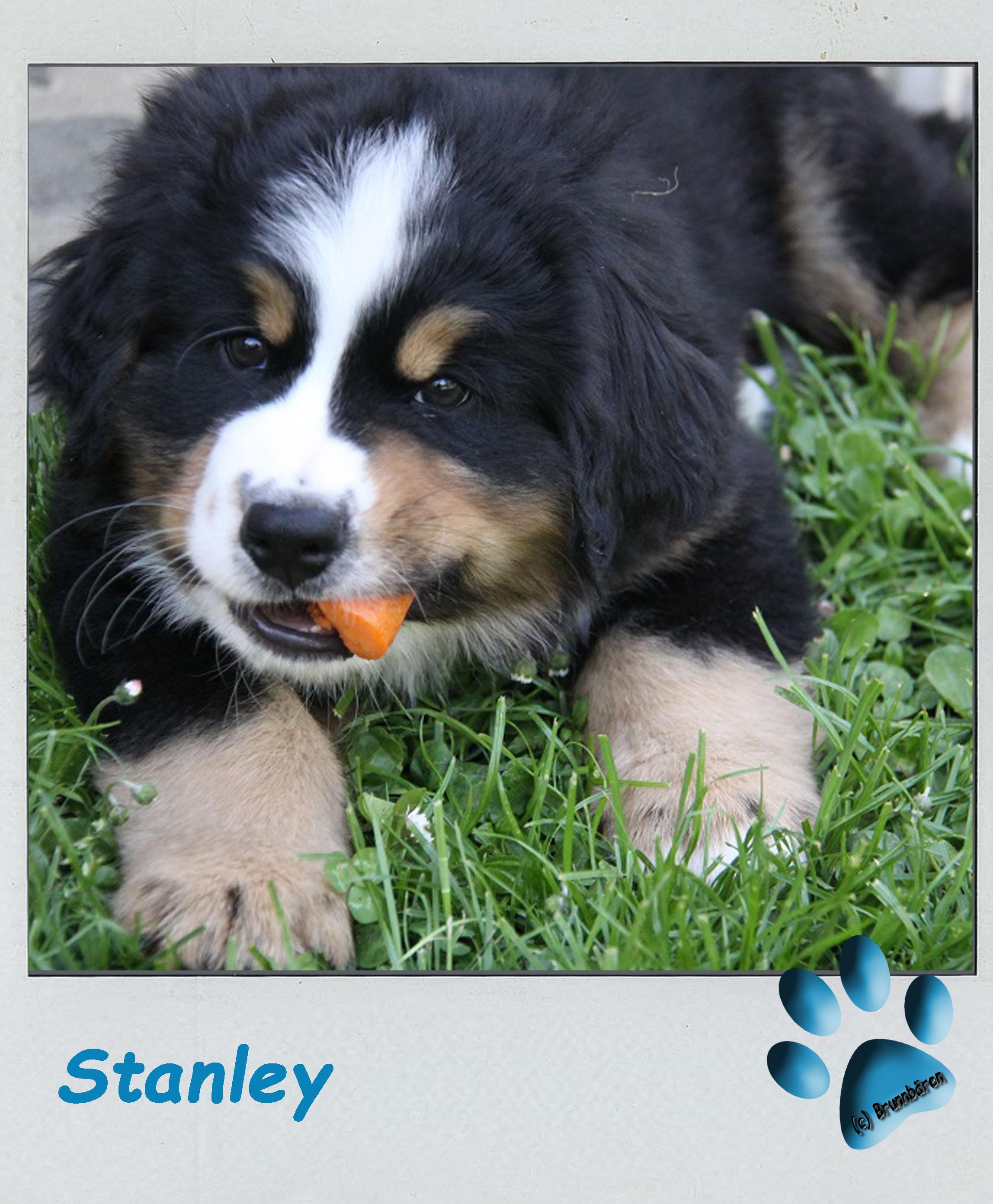 8 Wochen - Stanley 3