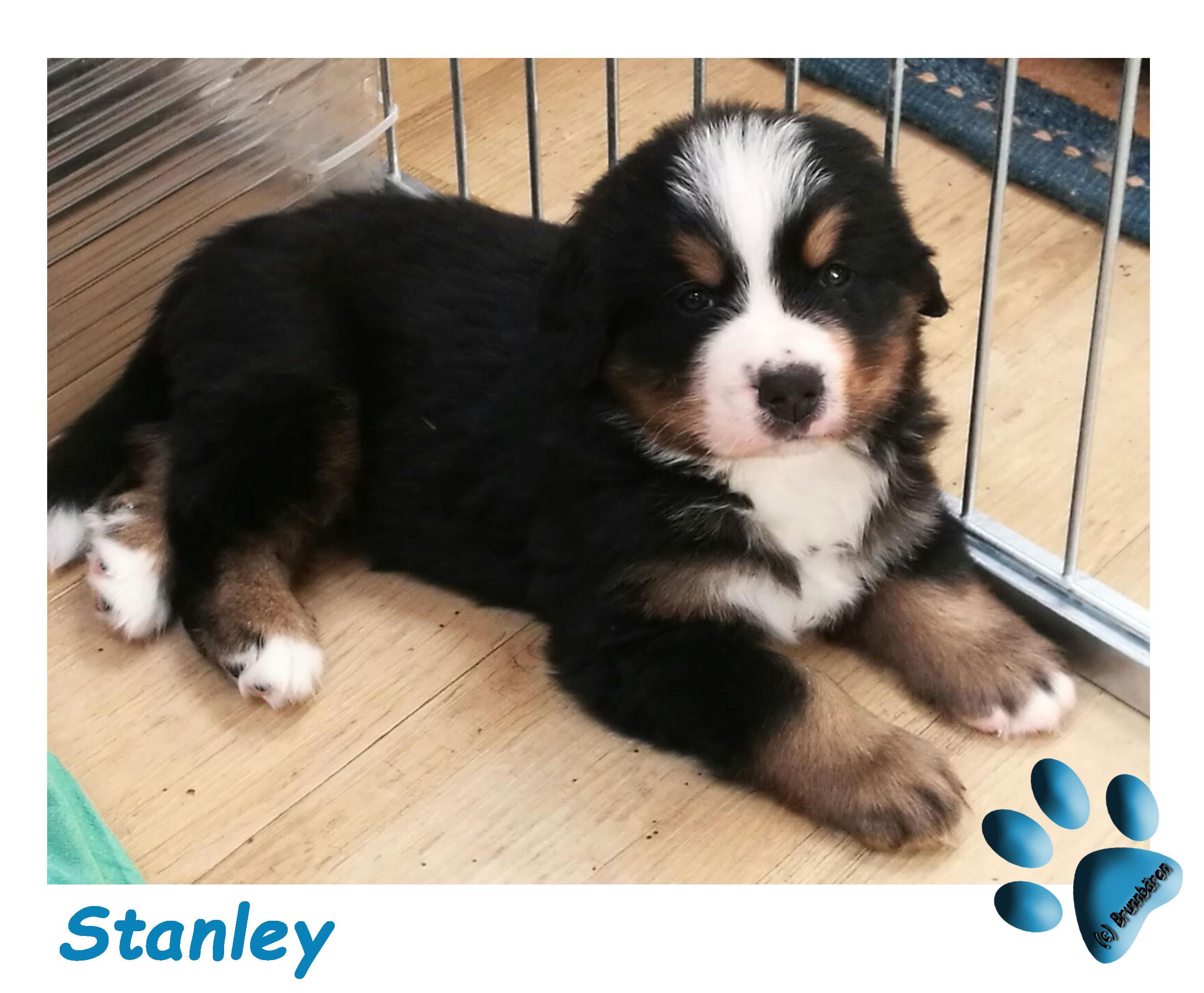 5 Wochen - Stanley
