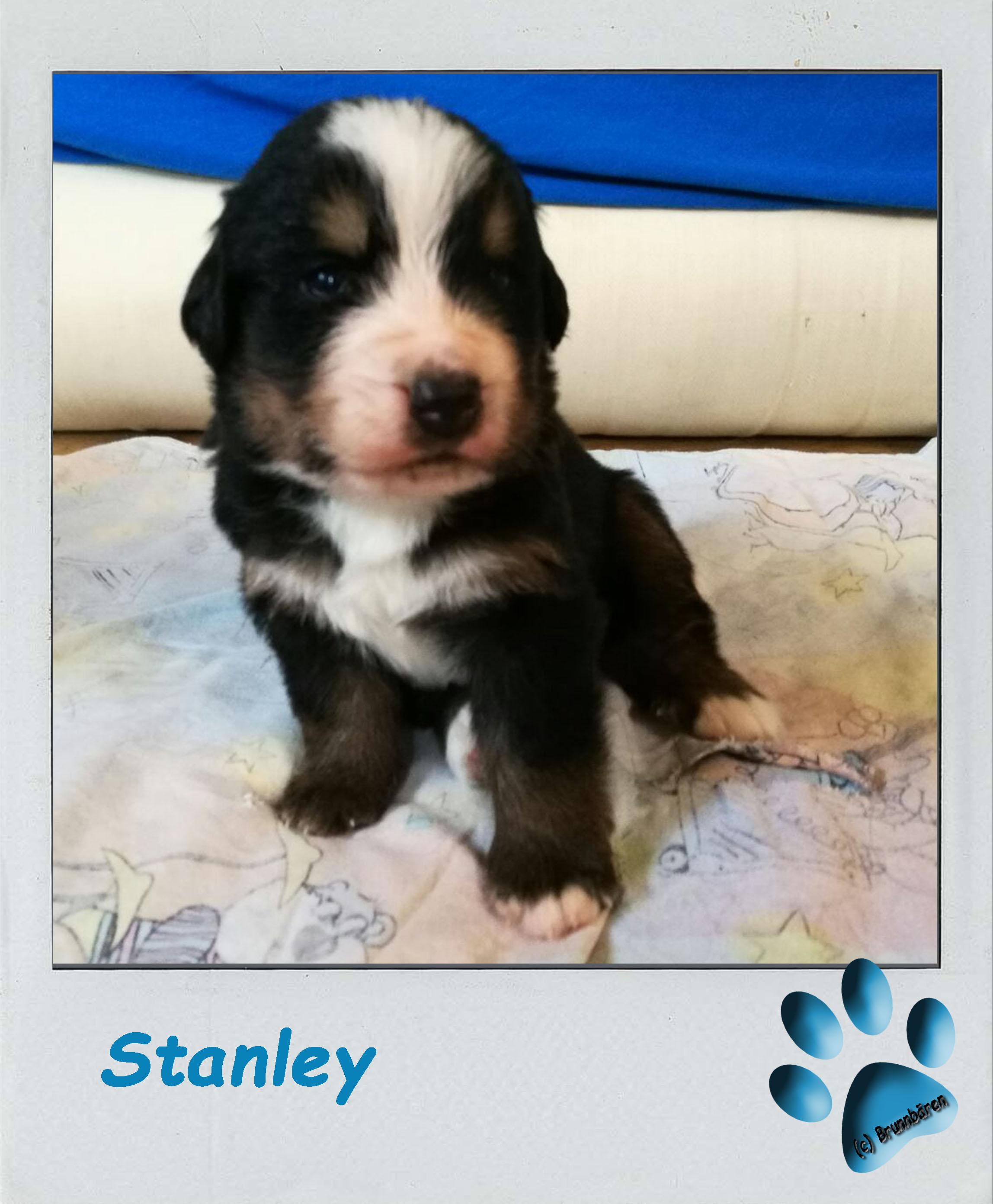 3 Wochen - Stanley