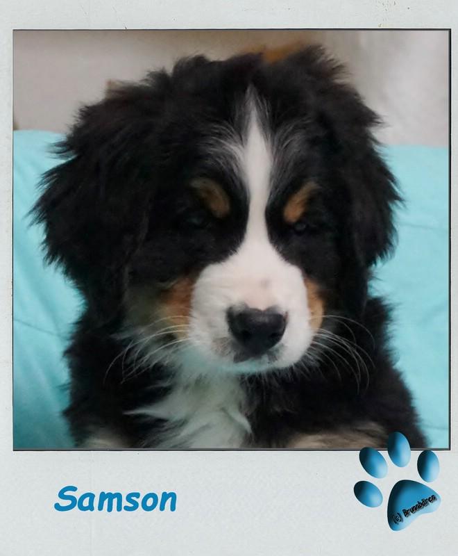9 Wochen - Samson