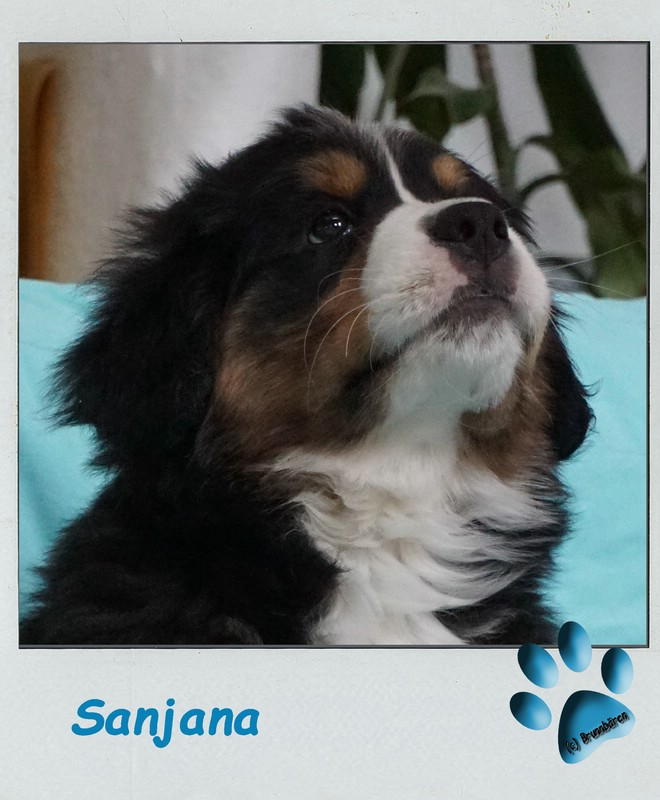 9 Wochen - Sanjana