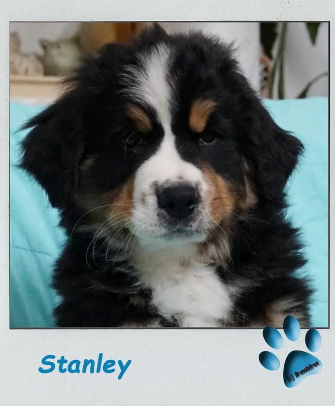 9 Wochen - Stanley