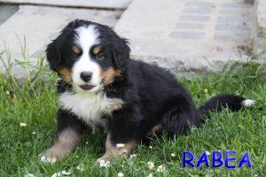 Rabea 6 Wochen