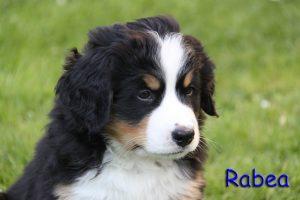 Rabea 7 Wochen