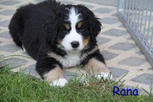 Rana 7 Wochen