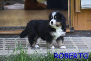 Roberto 6 Wochen