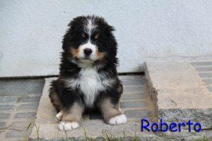 Roberto 7 Wochen