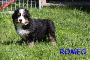 Romeo 6 Wochen