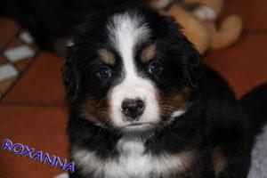 Roxanna 5,5 Wochen