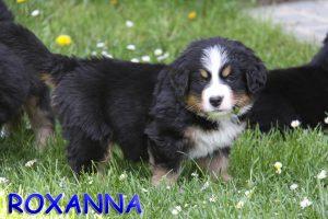 Roxanna 6 Wochen