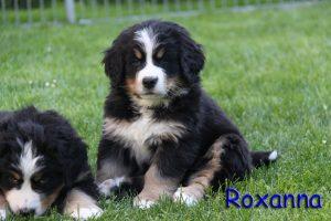 Roxanna 7 Wochen