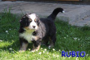 Rubio 6 Wochen