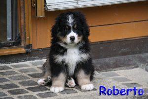 Roberto 8 W